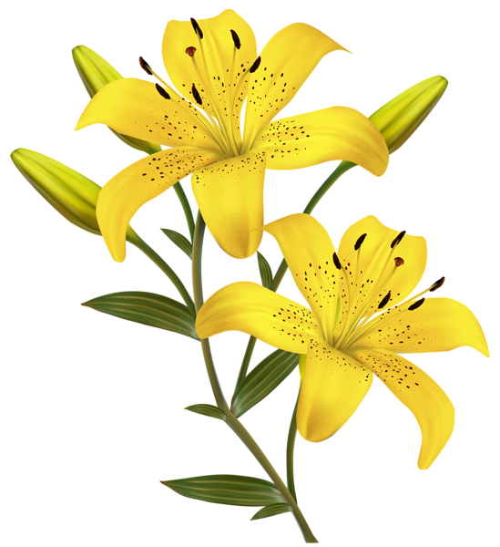 549x600 Yellow Lilies Png Clipart Image Travel Around Etsy And Not Just