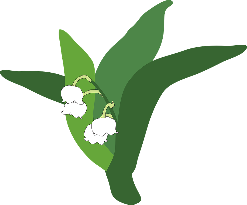 864x720 Lily Of The Valley Clipart Transparent