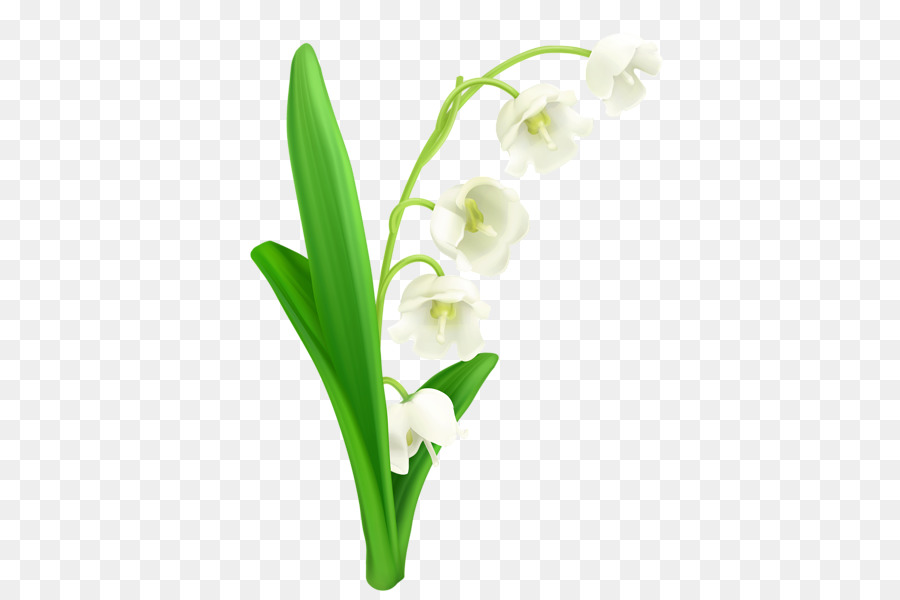 900x600 Lily Of The Valley Lilium Clip Art