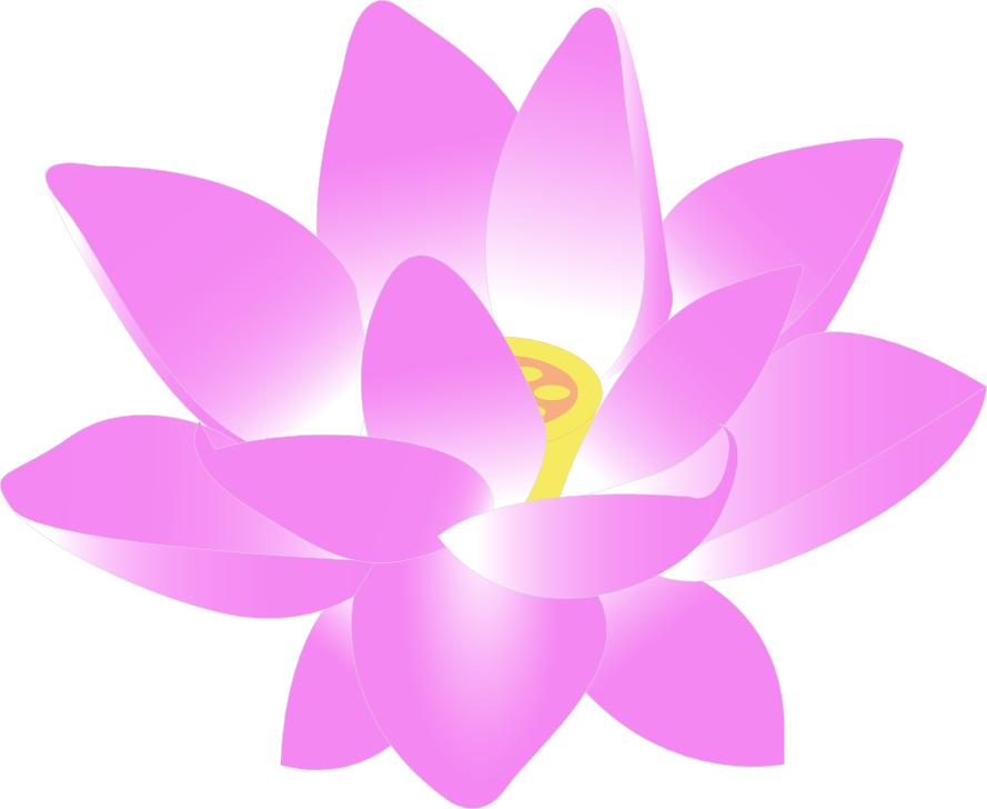 889x728 Lotus Flower Clipart Lotus Flower Clip Art Plantsflowersllotus