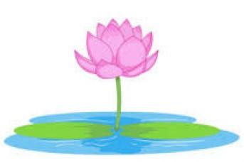 343x228 Lotus Flower Images Clip Art