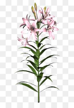 260x380 Product Plant Stem Design