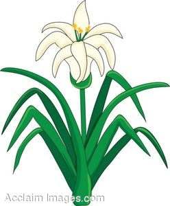 lily flowers clipart at getdrawings com free for personal use lily rh getdrawings com easter lily clipart easter lily clip art for church bulletins
