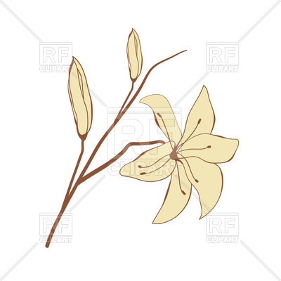 400x400 Vintage Look Hand Drawn Lily Royalty Free Vector Clip Art Image