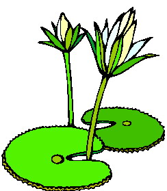 244x279 Water Lily Clip Art Flowers And Plants