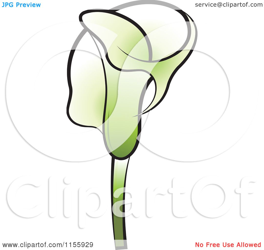 1080x1024 Clipart Of A Green Calla Lily Flower 2
