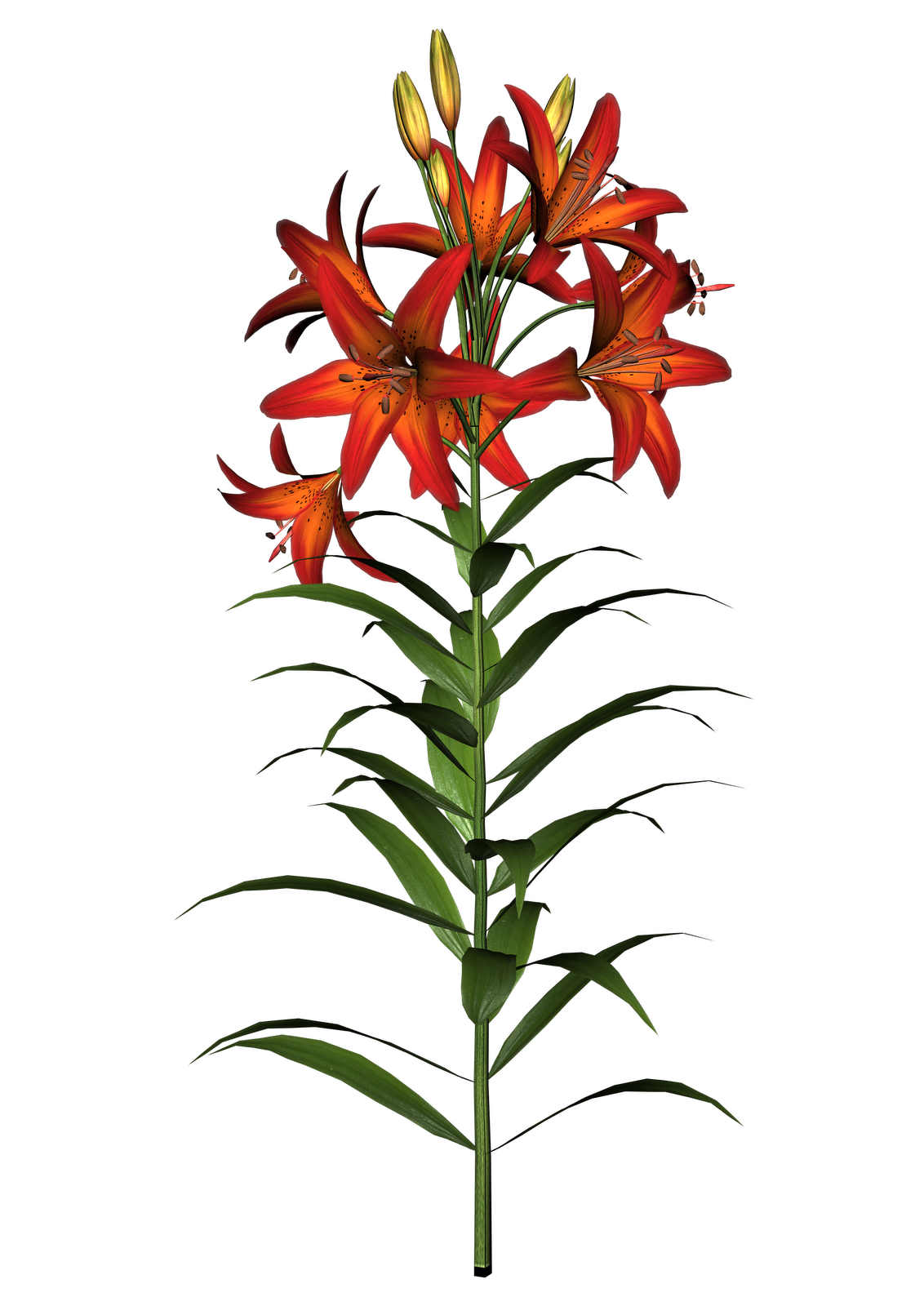 Lily flowers clipart at getdrawings free for personal use lily 1132x1600 easter lily clipart izmirmasajfo