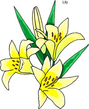 lily flowers clipart at getdrawings com free for personal use lily rh getdrawings com easter lily clipart black and white easter lily clip art free