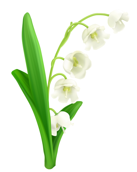 477x600 Lily Of The Valley Png Clipart Lily Of The Valley