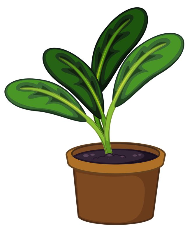 659x800 Lily Clipart Potted