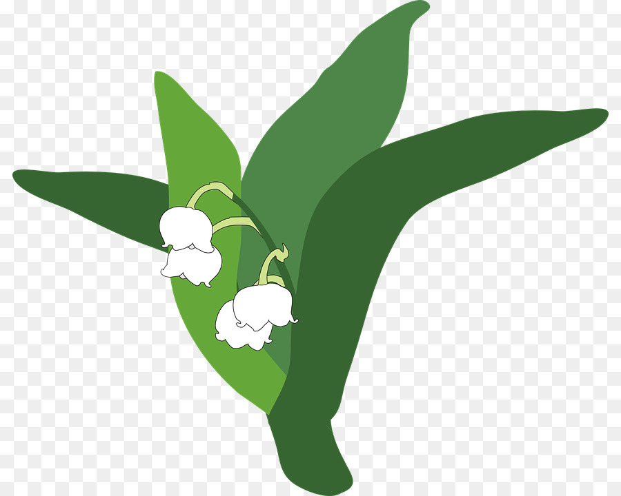 900x720 Lily Of The Valley Clip Art