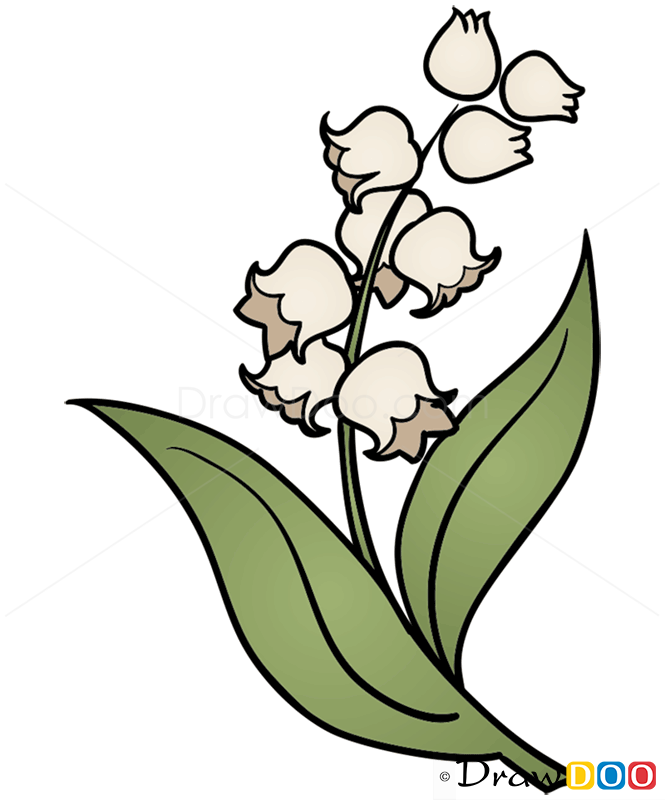 665x800 Collection Of Lily Of The Valley Flower Drawing High Quality