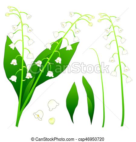 450x470 White Lily Of The Valley. Isolated On White Background . Vector