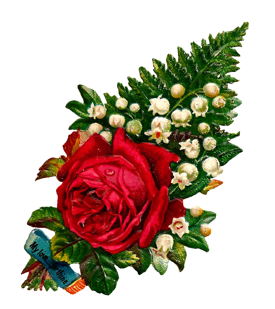 896x1006 Antique Images Free Digital Flower Red Rose Clip Art With Lily