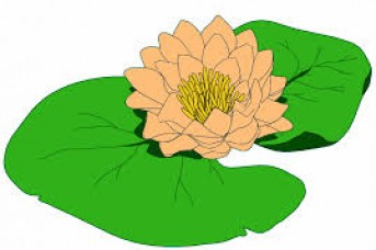 343x228 Free Flower Clipart S