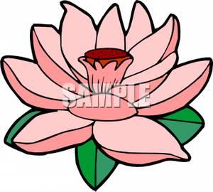 300x270 Lily Pad Clipart Lotus Plant