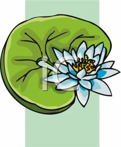 248x300 Clip Art Image A Lotus Flower And Lily Pad
