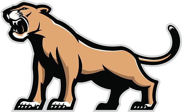 612x375 Photos Mountain Lion Clip Art,