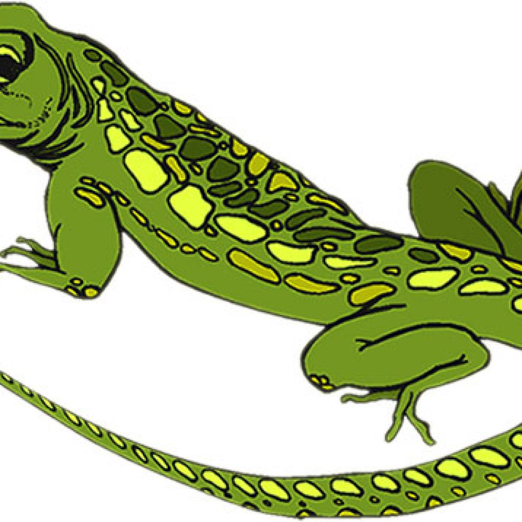 lizard clipart at getdrawings com free for personal use lizard rh getdrawings com lizard clipart images lizard clipart free