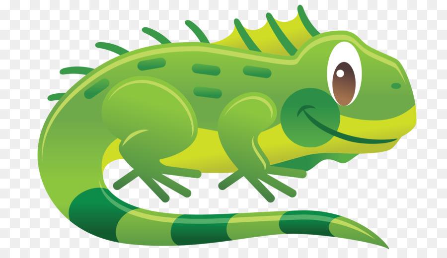900x520 Chameleons Reptile Green Iguana Lizard Clip Art
