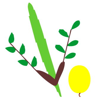 Lulav And Etrog Clipart