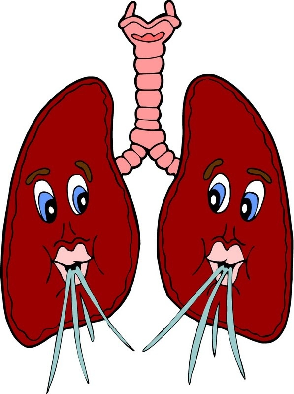 597x800 Cool Of Lungs Clipart For Kids