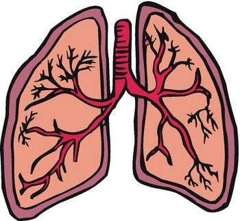 350x322 Lungs Clip Art Clipart Panda