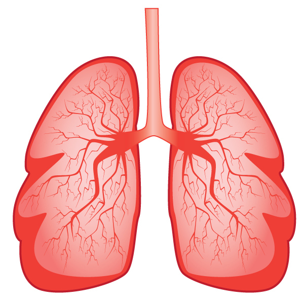 lungs clipart at getdrawings com free for personal use lungs rh getdrawings com lung clipart lung clipart