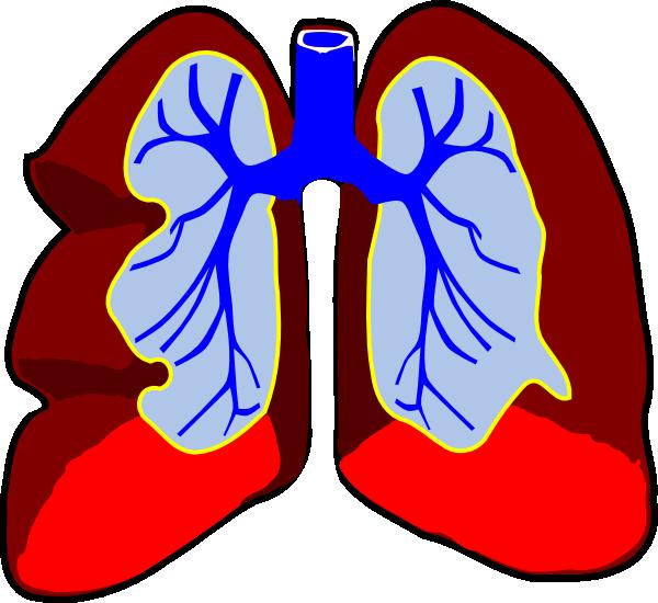 600x550 Cartoon Doctors Utensils Cartoon Lungs Clip Art Doctors