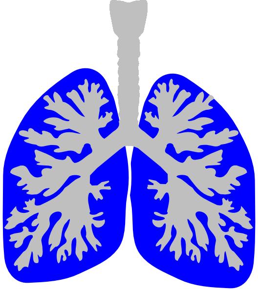 528x596 Lung Blue Clip Art