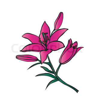 320x320 White Lilly Flower Isolated On White Background. Vector Clip Art