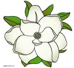 Magnolia Flower Clipart At Getdrawingscom Free For Personal Use