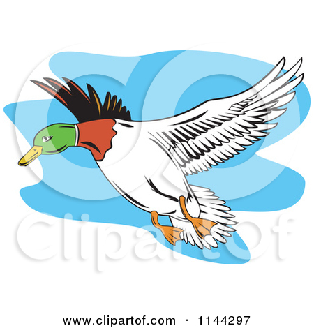 450x470 Mallard Duck Flying Clipart Panda