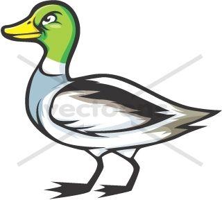 320x288 Best Of Mallard Duck Clipart