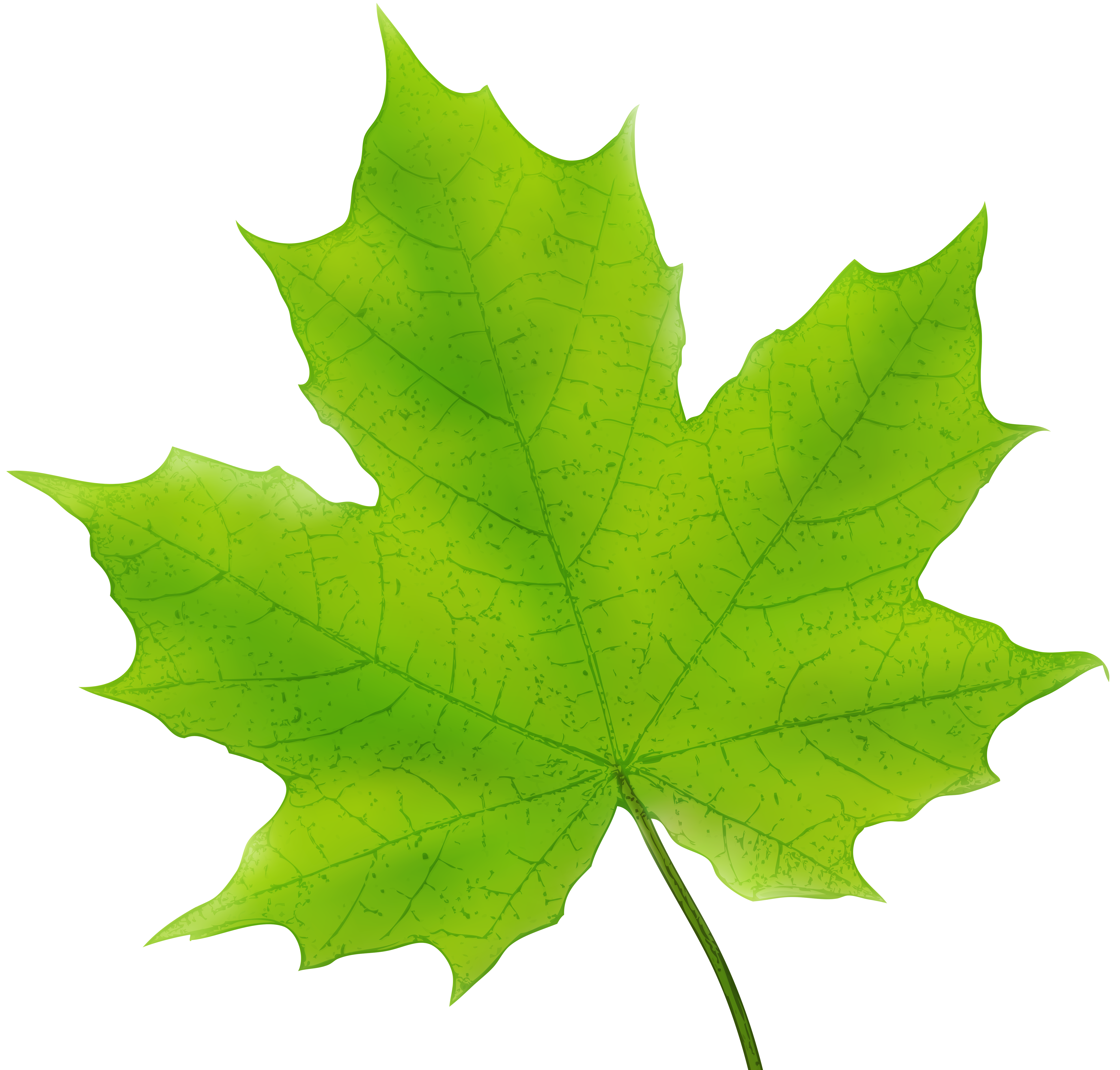 5000x4774 Maple Leaf Green Png Clip Art Imageu200b Gallery Yopriceville