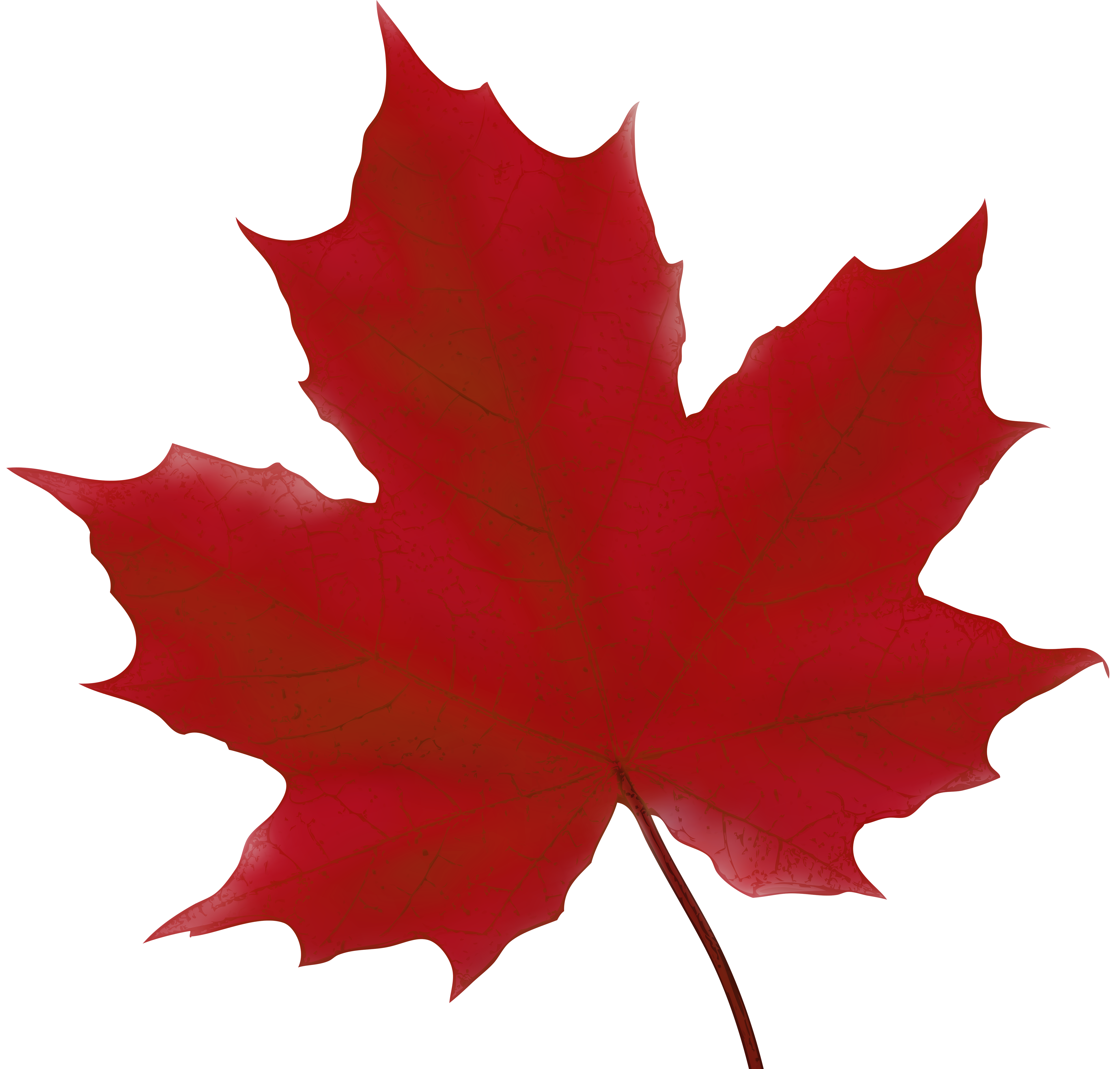 5000x4774 Maple Leaf Red Png Clip Art Imageu200b Gallery Yopriceville