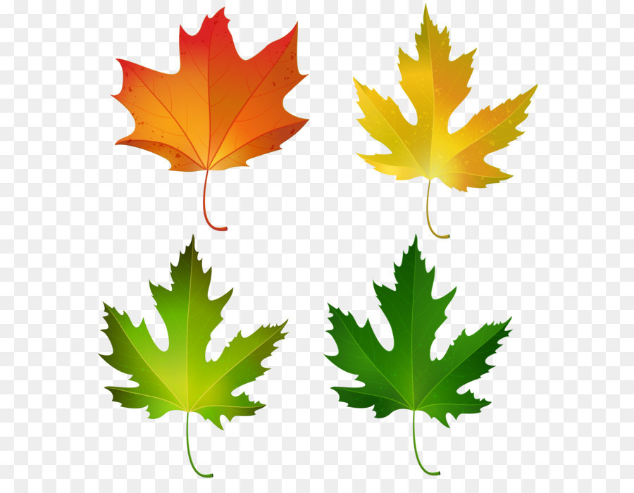900x700 Maple Leaf Autumn Leaf Color Sugar Maple Clip Art