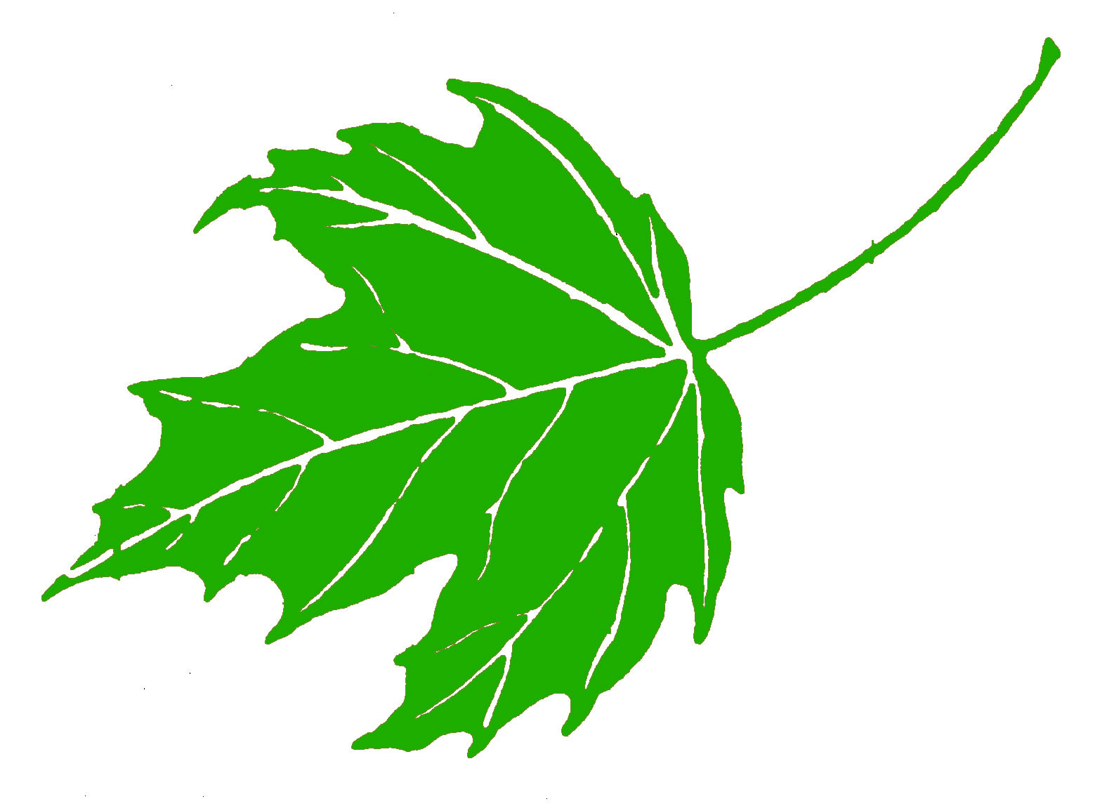 1576x1148 Clipart Maple Leaf Green