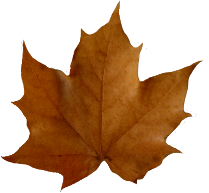 409x379 Leaves Maple Leaf Clip Art Free Vector In Open Office Drawing Svg