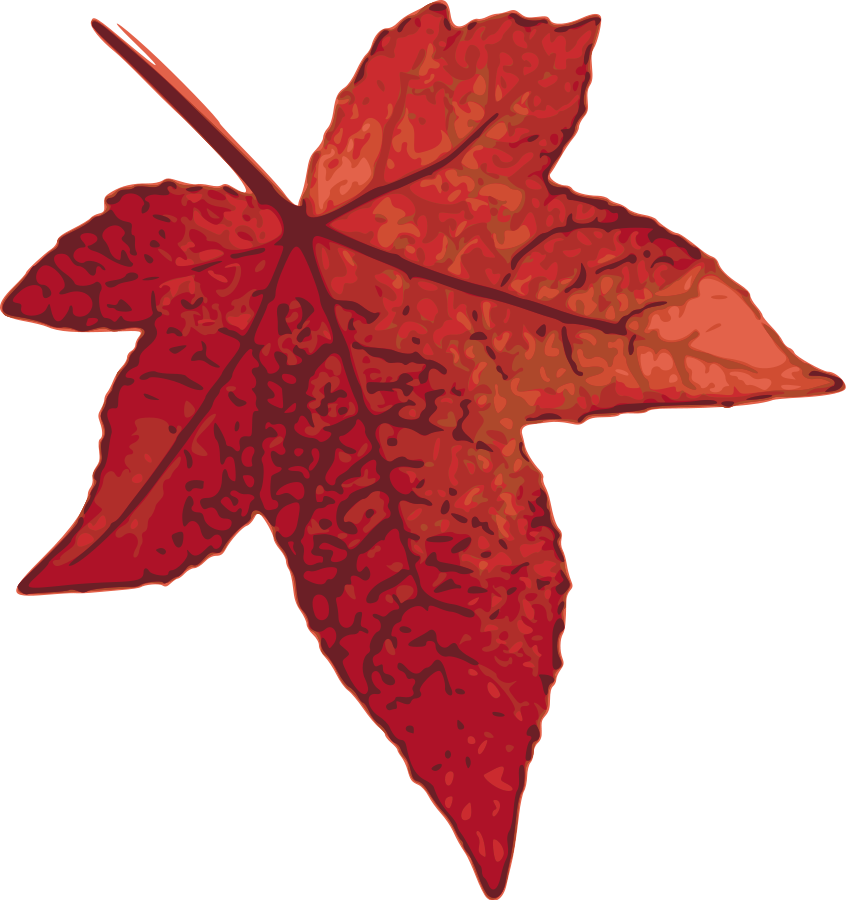 846x900 Maple Leaf Maple Tree Clip Art