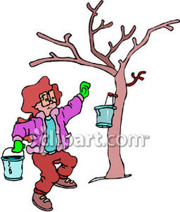 256x300 Clipart Maple Syrup