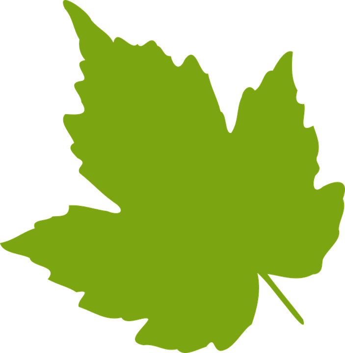 703x720 Maple Leaf Clipart Fall Leaves