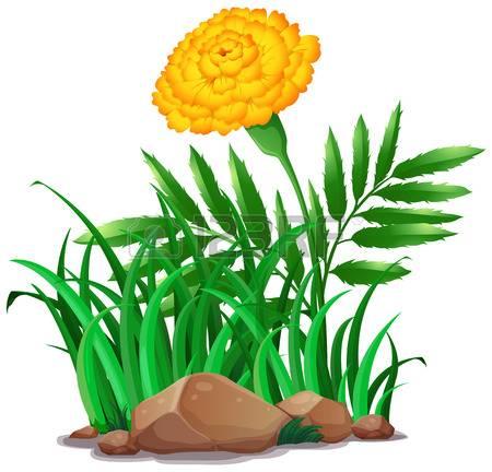 450x432 Morning Glory Clipart Marigold Flower