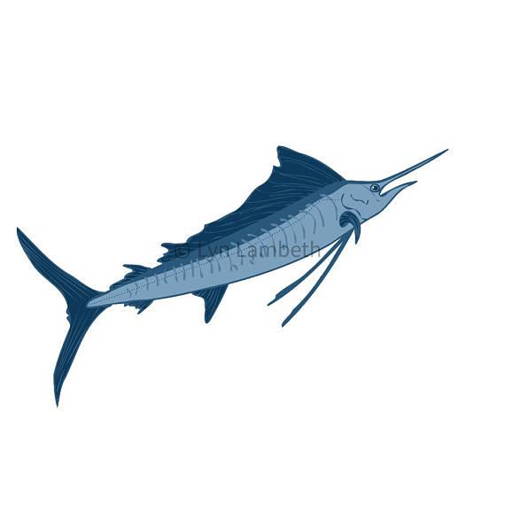 570x570 Fish Clipart Tuna Shark Sailfish Barramundi Ocean Clip Art
