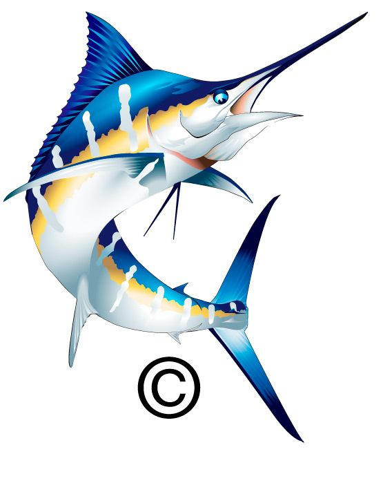 555x699 Marlin Clip Art Related Keywords Amp Suggestions