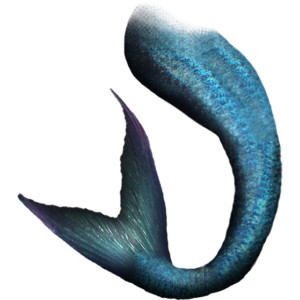 300x300 Mermaid Tail Png