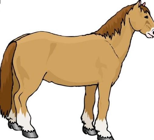 507x462 Serape Horse Pictures Clip Art