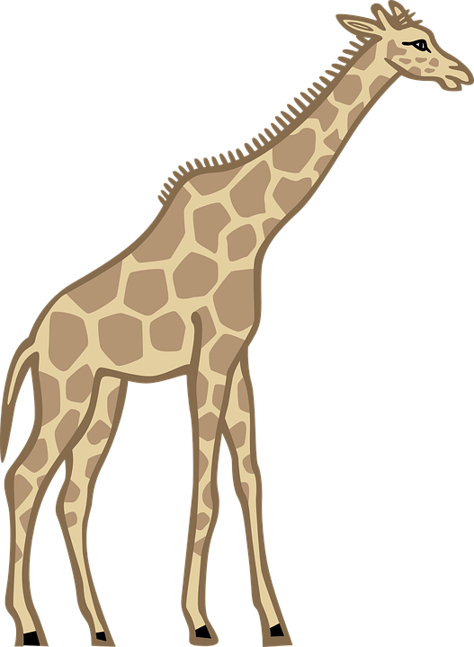 527x720 Free Giraffe Clipart Photos And Free Pictures
