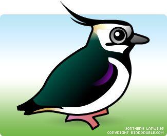 325x265 11 Best Mockingbirds Images On Bird Watching, Birds