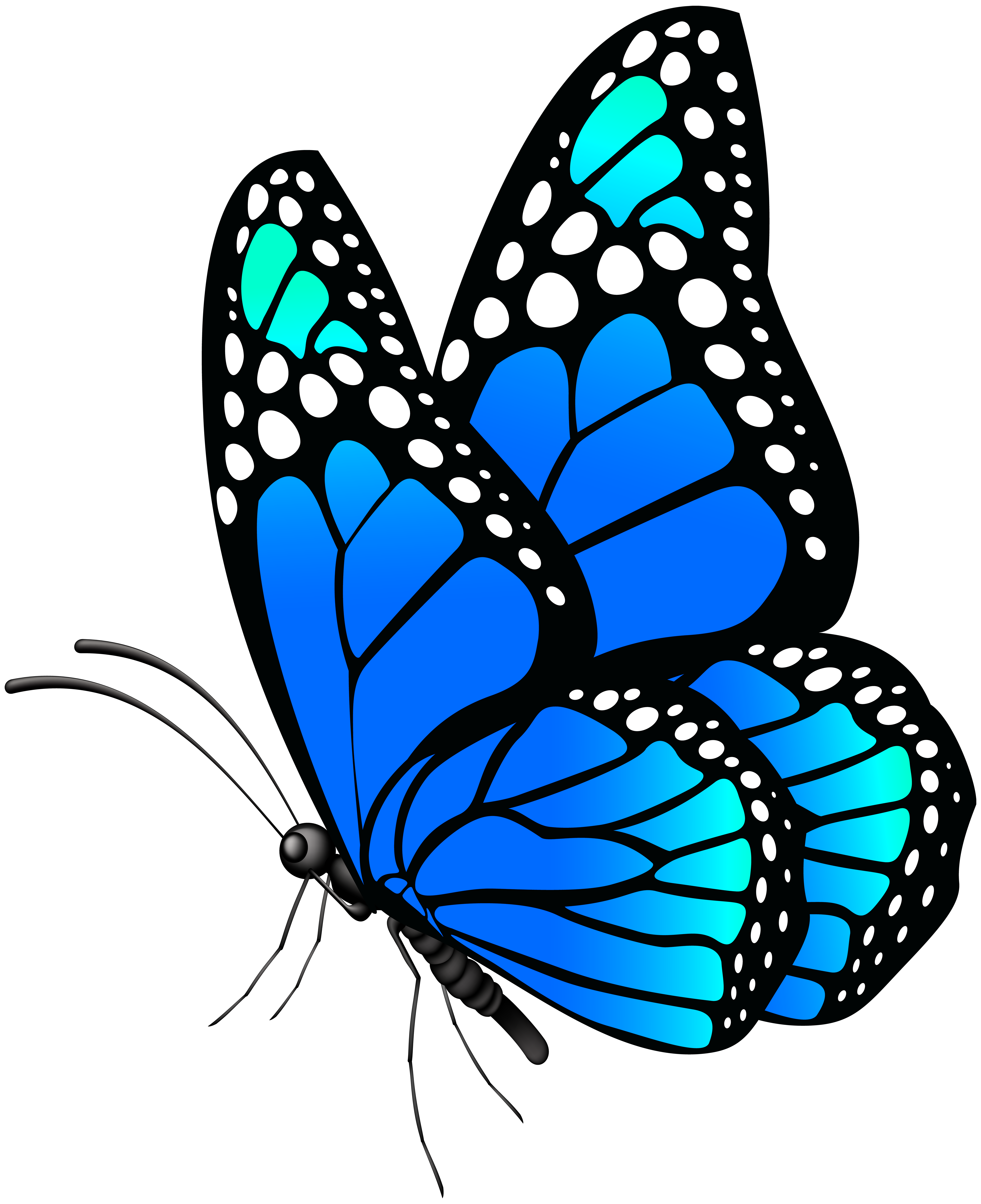 Monarch Butterfly Clipart At Getdrawings Com Free For